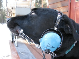 I can teach my black labrador retriever Bernt most anything . . . but he still has some difficulty talking on the radio.