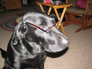 No doubt if a Black Labrador spends too much time on the computer, he experiences some eye strain.