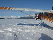 My Citabria aircraft sitting on the Selby Lake ice on skis - lined up with the spruce bough marked