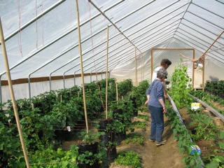 John Dart, owner of the greenhouse - and Damaris Mortvedt - peruse some of the strawberry and cucumber plants.